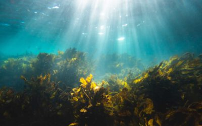North Seaweed en CIV Offshore & Shipping testen zeewierkweek in de Eemshaven